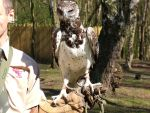 Harpy Eagle by Mrs-Sin