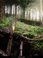 Forest 10 by AnitaJoy-Stock