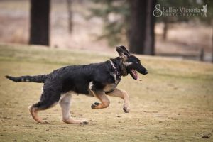 Bella Zoomies by ShelleyVPhoto