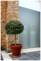 Olive Tree@Mall by etsap