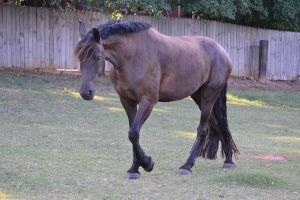 Tempest Friesian Horse Stock4 by blue-eyed-book-lover