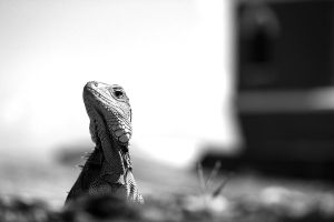 Your Majesty, the Reptile by fotomademoiselle
