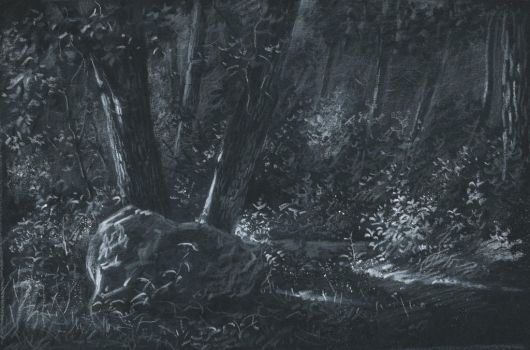 In the woods : White pencil on black paper by wimke