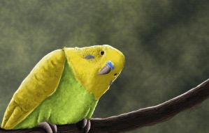 Budgie by vollmondstudio