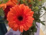 Orange flower burst by Friday-On-a-TuEsDaY