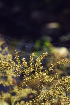 Spiders by odaa