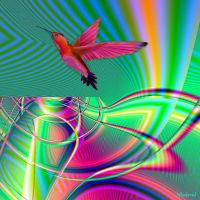 Colorful hummingbird flight. by Mladavid