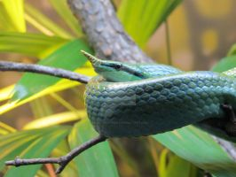 A Green Snake by Honeybunny52212