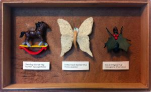 Looking Glass Insects Taxidermy Set by tursiart