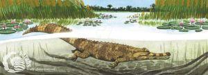 Tomistoma by saraquarelle