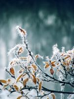 28.10.2012: Frost, Colours by Suensyan