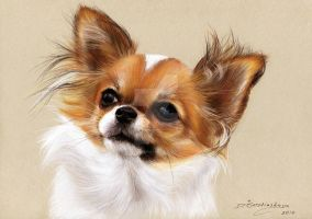 Commissioned panting of Chihuahua Farah by petpaintings