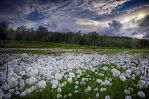 North Norway... 33 by my-shots