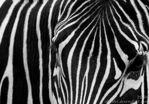 Black and white stripes by Allerlei