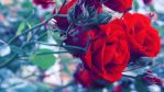 roses widescreen wallpaper by illusionality