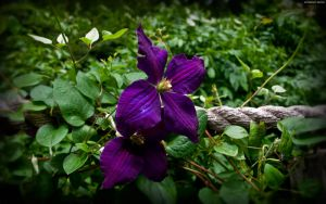 Purple Vine Blossoms by StarwaltDesign