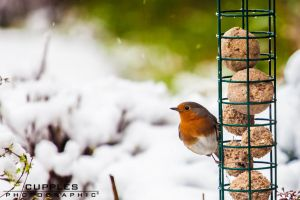 Feeder by cupplesey