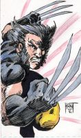Wolverine Sketch Card by KenHunt