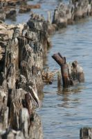 Pilings... by andrewarmstead