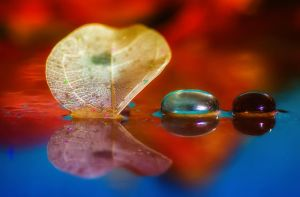 Reflection of leaf and glass pebbles by WelshPixie