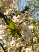 Spring in the air by paolica