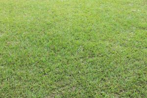 Grass Texture - wide angle by J2442