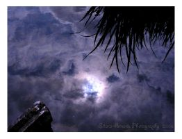 Rising Moon.. by Sitara-Amaris