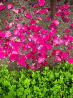 Petals and leaves by Trablete