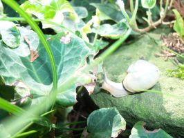 Snail eating in the garden by Mecarion