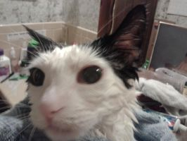 Ghosty Face getting towel dried #1 by PiccoloFreakNamick