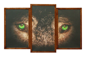 Wolf Eyes Framed 3 panel Canvas Print by Joe-Lynn-Design