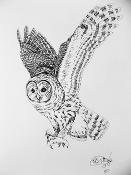 Dotted Owl by unBottledFairy