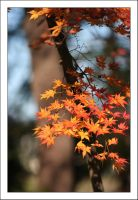 Autumn Leaves 7 by kucingitem