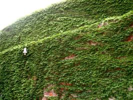 Ivy Wall by LittleCrowStudio