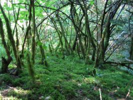 hidden forest by mimose-stock