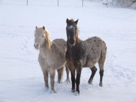 Ponies in the snow by kaelby