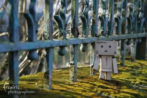 Another walk along the fence by arcoirisphoto