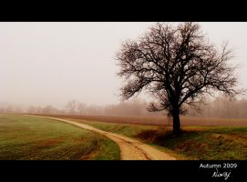 Black tree in morning mist by niwaj