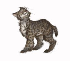 Bobcat Sketch by Sandora