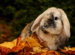 Autumn Bunny by AlinaKurbiel