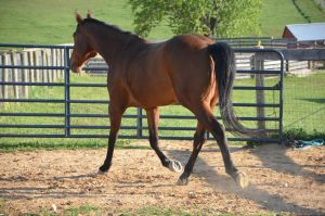 warmblood6 by Spotstock