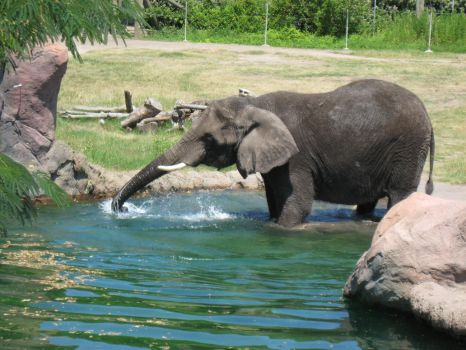 Elephant Playing with Water by AccursedGrace