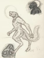 Werewolves by AcanyaHelke
