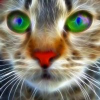 Fractal cat stare by debby-saurus