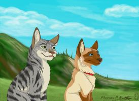 City Cats by Falcolf