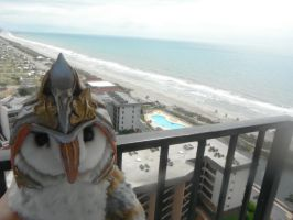 Levi in Myrtle Beach by ProjectOWL