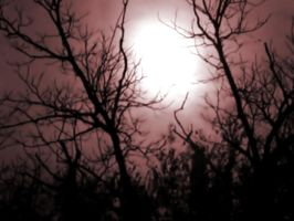 Moonlight Through Trees 6 by DarkMaiden-Stock