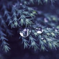 dew drops by girlmarvel