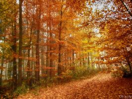 colourful autumn II by Weissglut