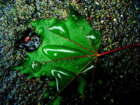 after the rain. by hellodearr